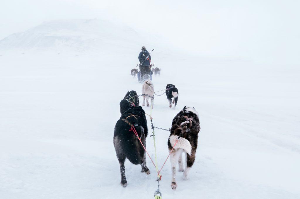 Dogsledding in Svalbard